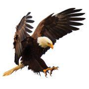 Gold-Eagle Cooperative logo