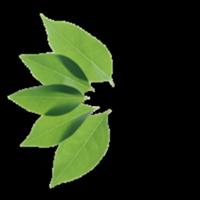 Terra Marin School logo